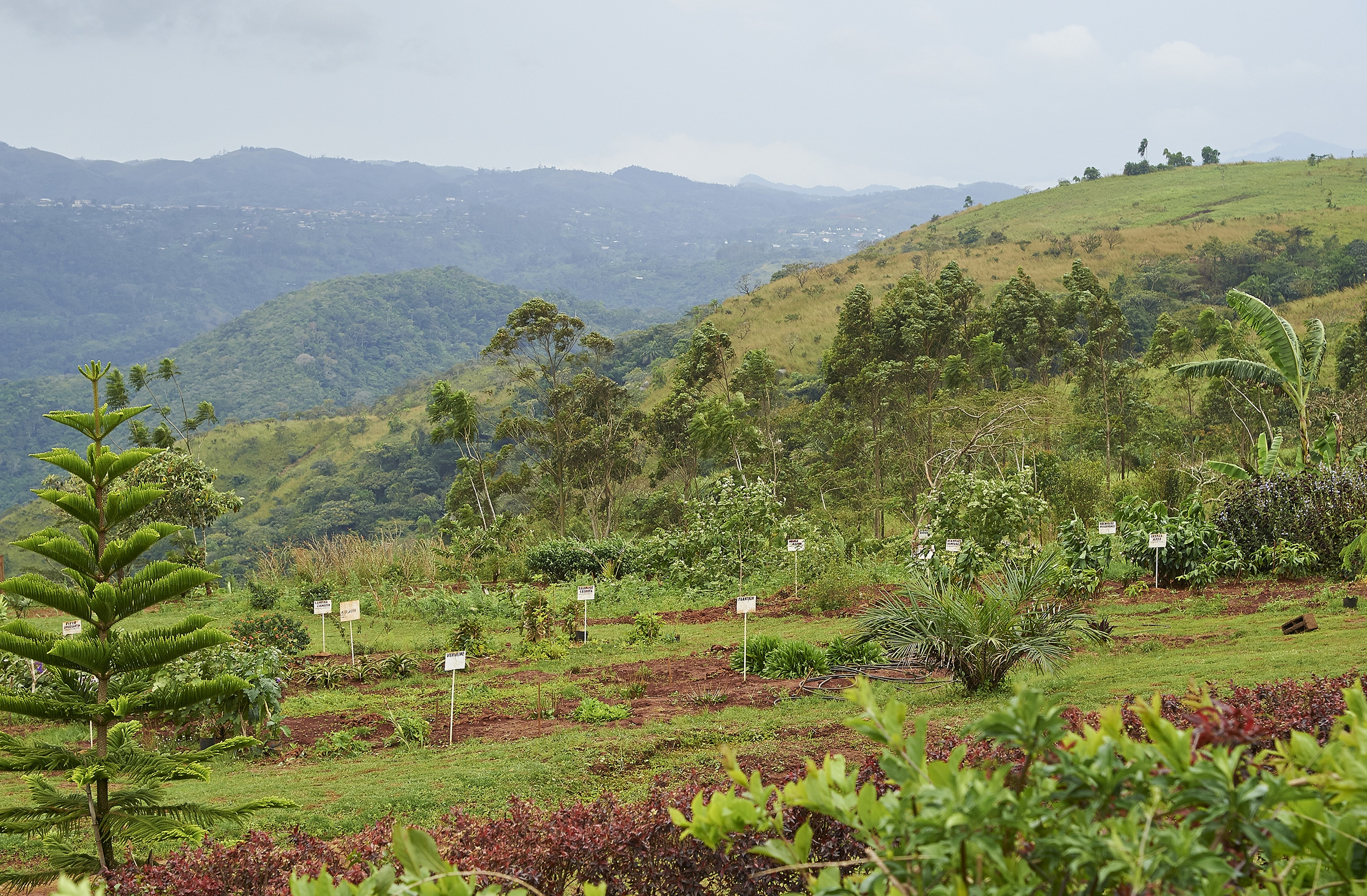 fondation-jardin-botanique-1